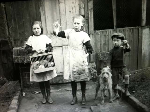 Rat catching children circa 1916