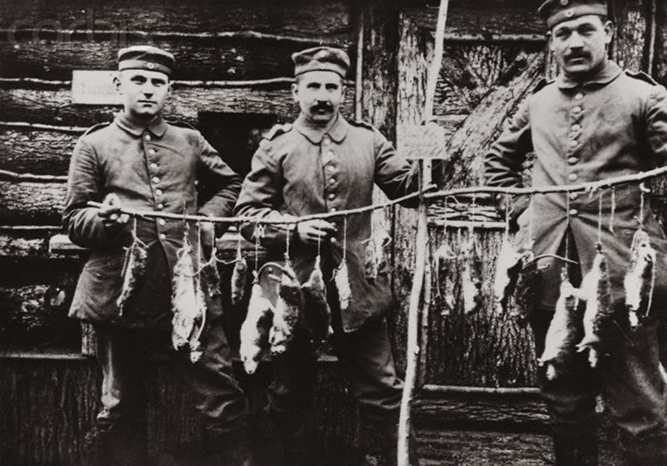 Trench rats killed by a terrier, 1916 3
