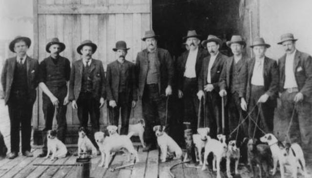 Rat dogs pictured with their handlers, ca. 1905. Whilst Sydney was most affected, the disease also spread to other parts of Australia.